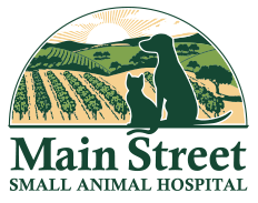 Main Street Small Animal Hospital